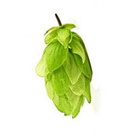 Leaf Hops STYRIAN GOLDING